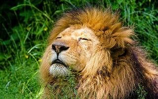 ライオン イソップ